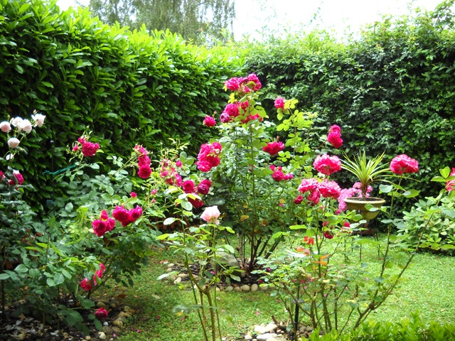 fusettes Néovie dans mon jardin