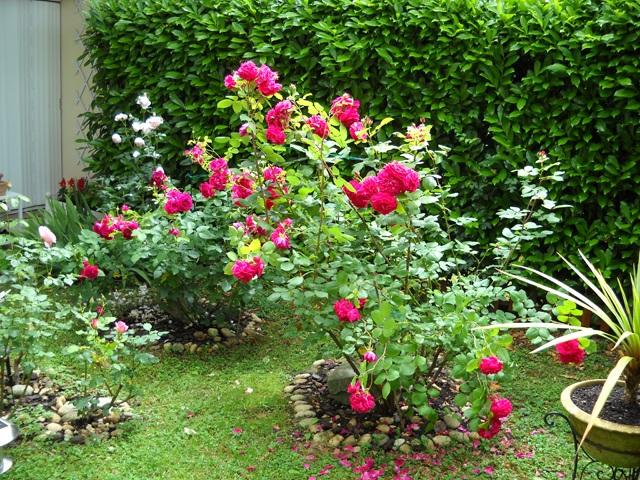 fusettes Néovie en géoplymères dans mon jardin